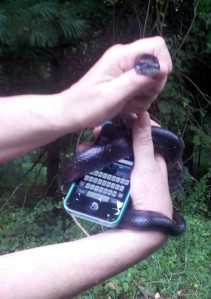 Black Racer & cell phone_T_2